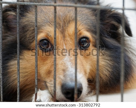 Dog in cage, unhappy face - stock photo