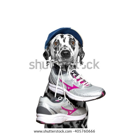 Dog in cap playing sports -- running and jogging - stock photo
