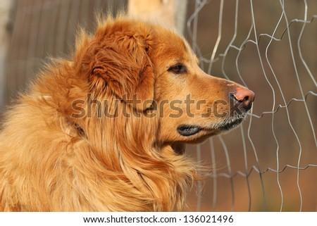 dog in captivity - stock photo