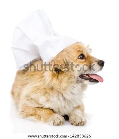 Dog in chef's hat looking to the right. isolated on white background - stock photo