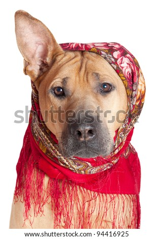 Dog in colorful scarf. Isolated over white.