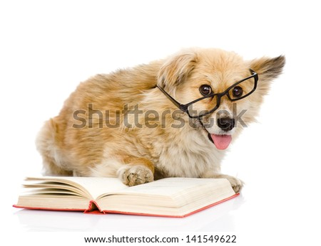 dog in glasses read book. looking at camera. isolated on white background - stock photo