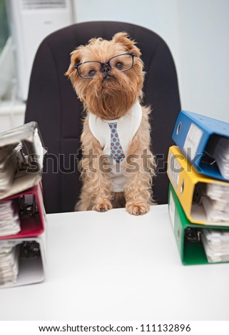 Dog in glasses sitting in an office chair, on with box folder with documents - stock photo