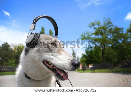 Dog in headphones in the park - stock photo