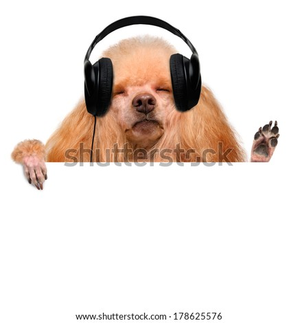 Dog in headphones listening to music - stock photo
