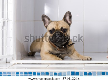 Dog in in an animal shelter, waiting for a home - stock photo