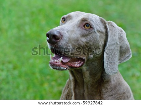 Dog in meadow - stock photo