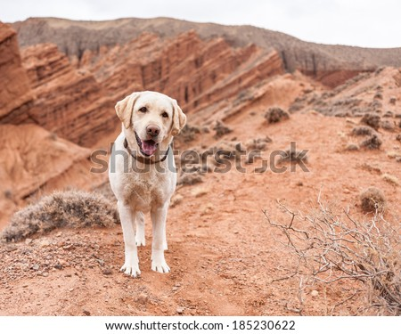 Dog in nature looks into the distance - stock photo