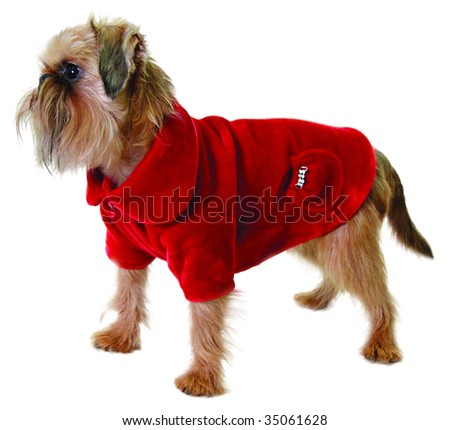 Dog in red jacket isolated on white - stock photo