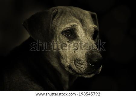 Dog in Sepia Color - stock photo