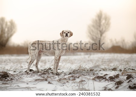 Dog in snow - stock photo