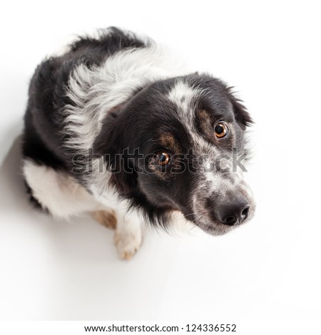 dog in studio - stock photo