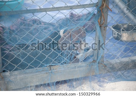 dog in the cage,begle - stock photo