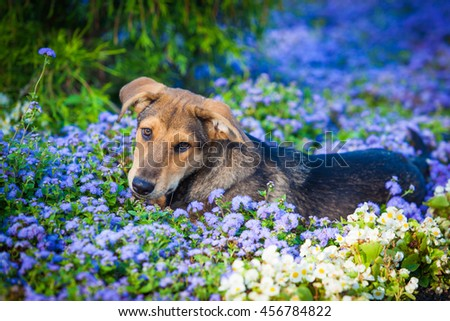 Dog in the flowers. Dog Portrait - stock photo