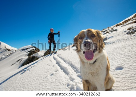 Dog in the mountains in the snow with mistress in alpine skiing - stock photo
