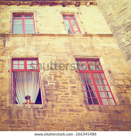 Dog in the Window of Old Stone French House, Vintage Style Toned Picture - stock photo