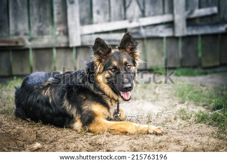 dog in the yard - stock photo