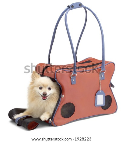 Dog in tote with clipping path. - stock photo