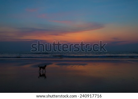 dog in twilight at the beach - stock photo