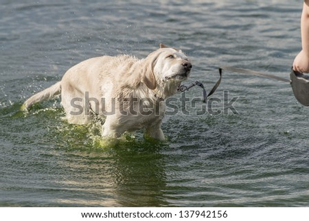 Dog in water and enjoy it - stock photo