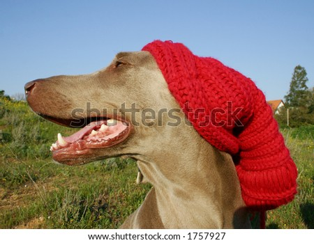 dog in winter look 3 - stock photo