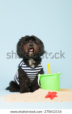 Dog is having holidays at the beach - stock photo