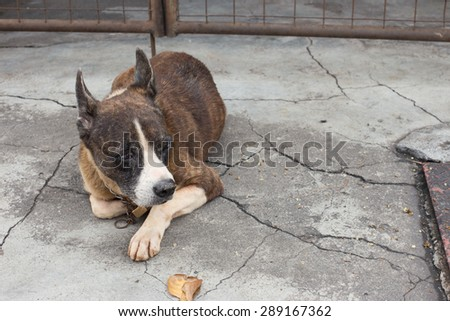 Dog is lying down on floor - stock photo