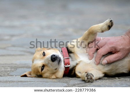 dog is petted - stock photo