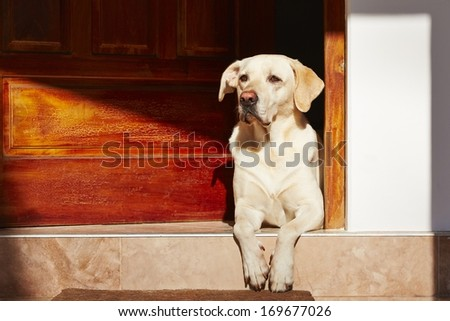 Dog is waiting in door of house. - stock photo