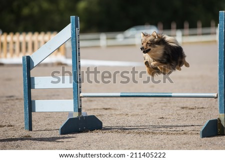 Dog jumps over a hurdle in agility competition - stock photo