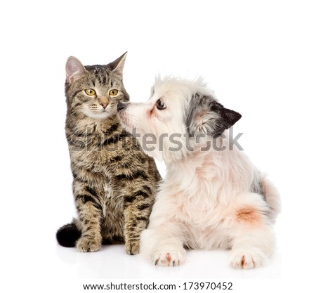 dog kisses cat. isolated on white background - stock photo