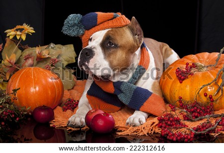 dog knitted hat and scarf, - stock photo