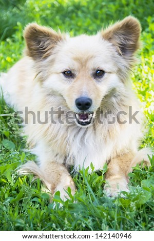 Dog laying down on the grass - stock photo