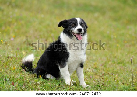 Dog laying on grass .