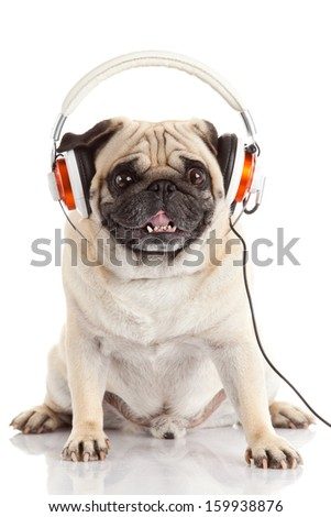 dog listening to music. Pug Dog isolated on White Background - stock photo