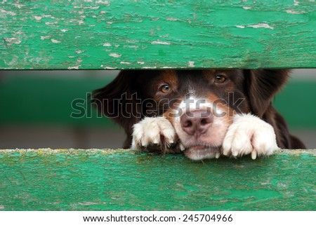 dog look at outside - stock photo
