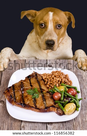 Dog Looking at Large Juicy Streak. - stock photo