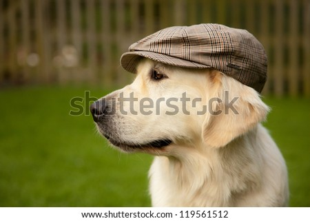 Dog looking away with old tradional hat on her head - stock photo