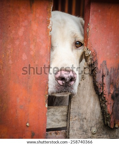 Dog looking through a doorway - stock photo