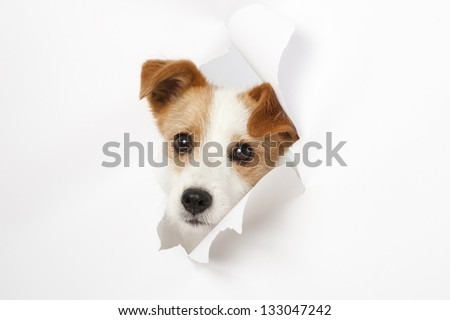 Dog looking through a hole