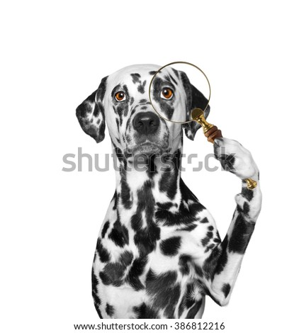 Dog looking through a magnifying glass loup - stock photo