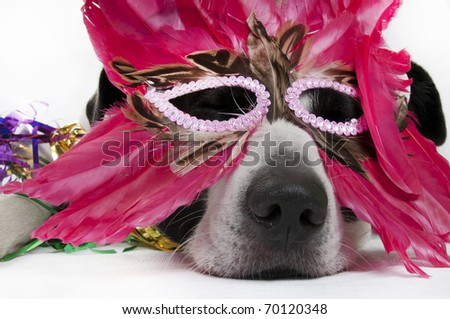 dog looking tired in feather mask - stock photo