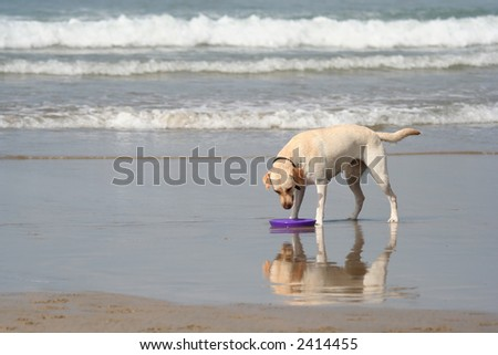 dog looking to the disc - stock photo