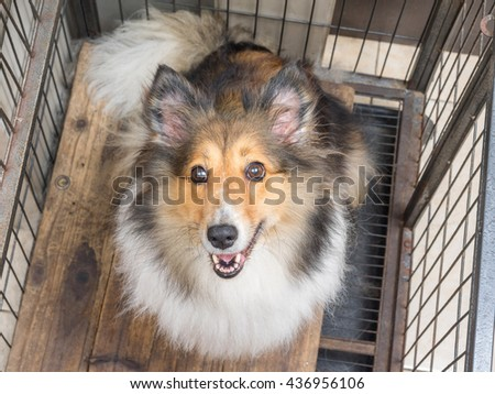 Dog looking up in cage with ears straight up. - stock photo