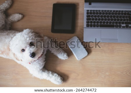 Dog lying in home office - stock photo