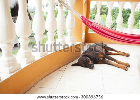 Dog lying in the hammock on the balcony - stock photo