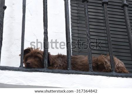 Dog lying on a balcony of a white house - stock photo
