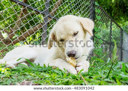 dog lying on a grass and gnaw a bone.
