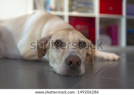 Dog lying on the floor