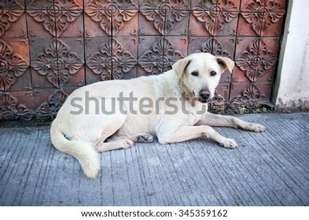 dog lying on the ground with sad eyes - stock photo